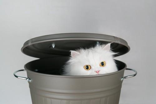 ゴミ箱の中に入って顔を出す猫
