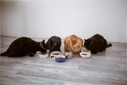 フードを食べる4匹の猫