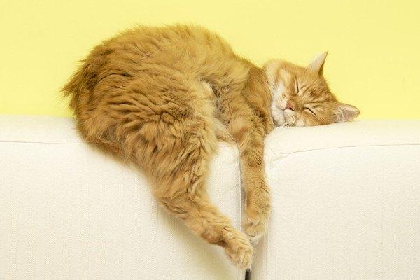 だらしなく白いソファで寝る猫