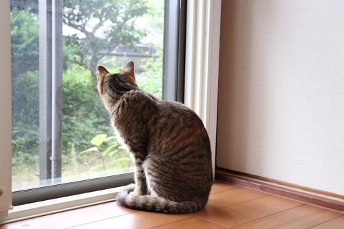 窓から外を見る猫の後ろ姿