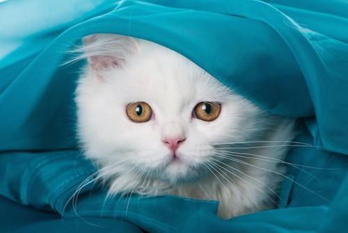 ブルーの生地の中に隠れる猫