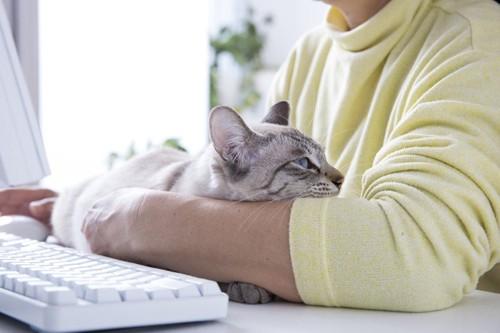 パソコンをする人と猫