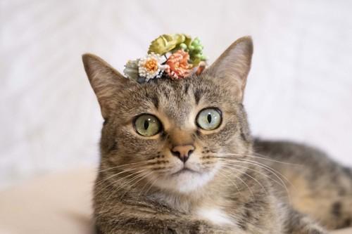 お花を頭の上に乗せる猫