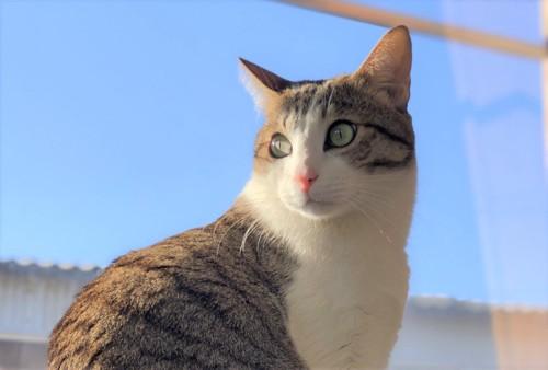 青空を背景にした猫