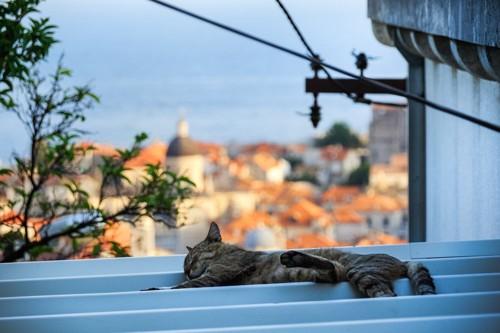 ドブロブニクと猫