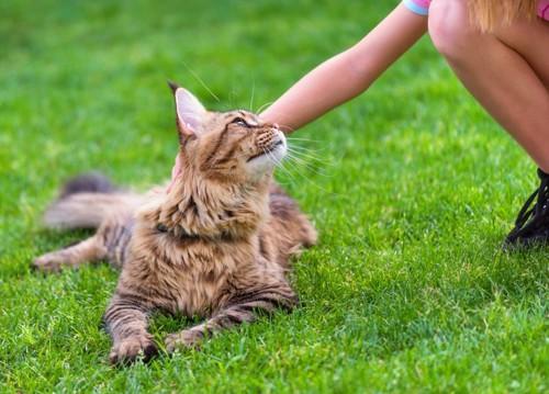 芝生に上で撫でられる猫