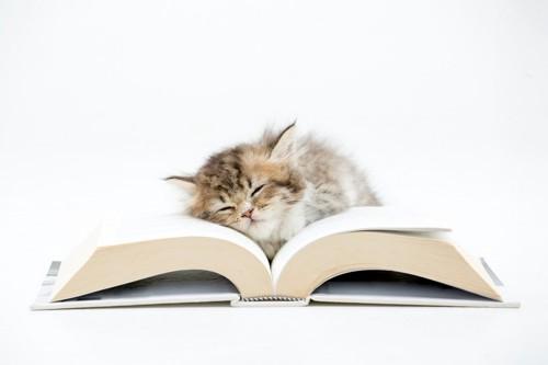 本の上で眠りこんでいる子猫