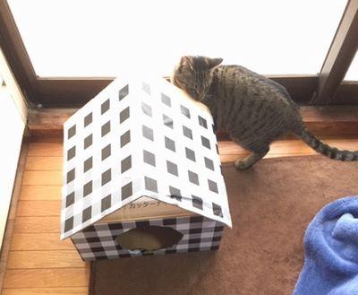 猫がダンボールハウスの後ろに写っている