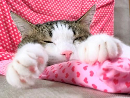 寝ている猫の手のアップ