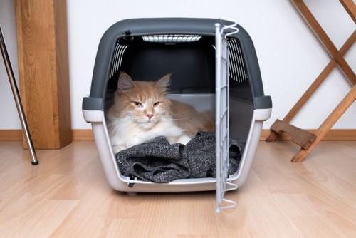 キャリーバッグの中にいる猫と毛布