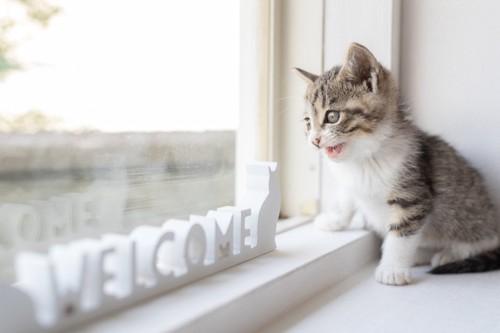窓から外を見る子猫とWELCOMEの文字