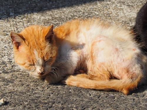 毛艶の悪い老猫