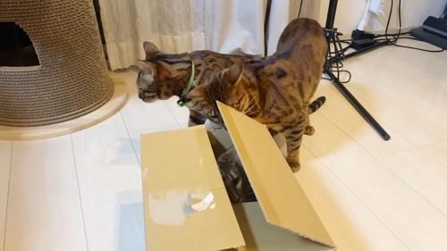箱の中にいる猫と中をのぞく猫