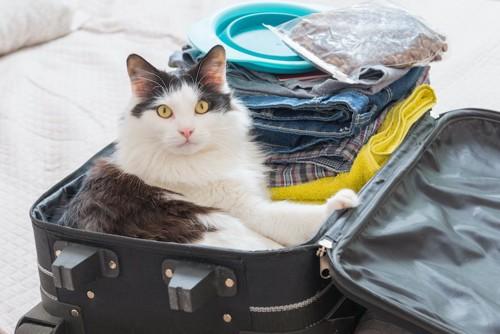 洋服が入ったスーツケースの中で寛ぐ猫