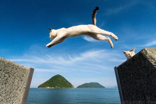 海の上を大ジャンプする猫