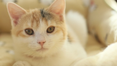 こちらを見つめる仔猫