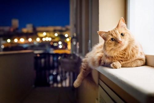 夜の窓辺にいる猫