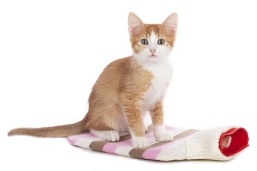 湯たんぽに乗っている猫