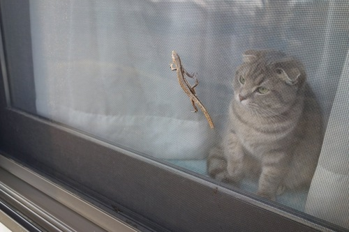 トカゲが気になる猫