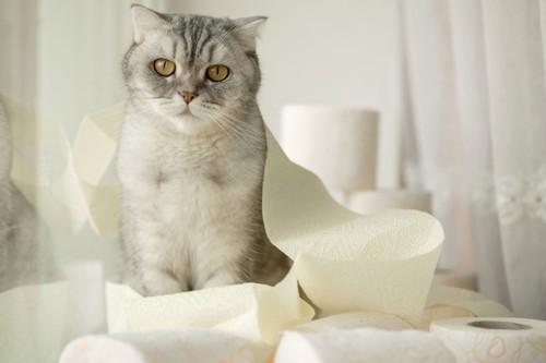 トイレットペーパーと猫