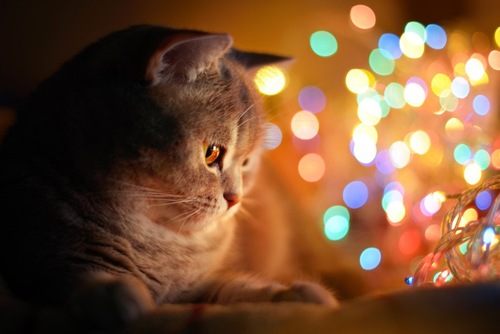 キラキライルミネーションと猫