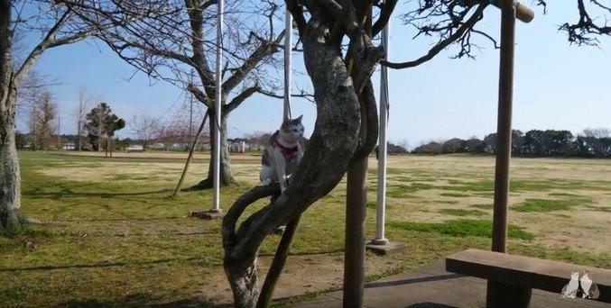 木を登る猫