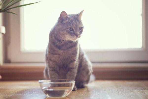 水を前にする猫