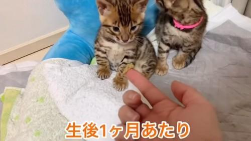 おすわりする子猫