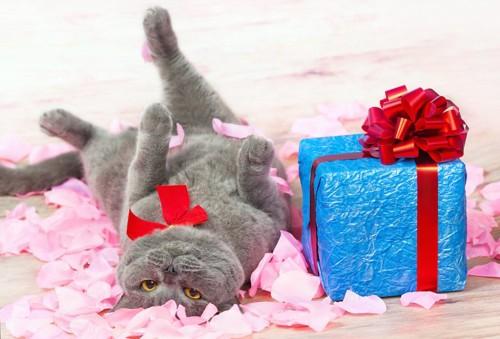 プレゼントの箱の横で寝転がる猫