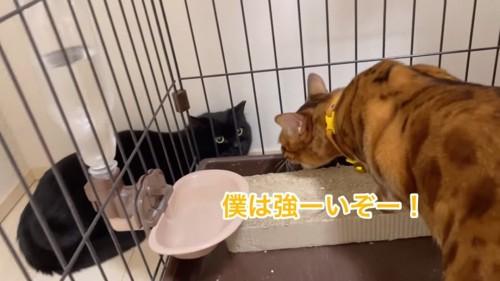 黒猫に威嚇する猫