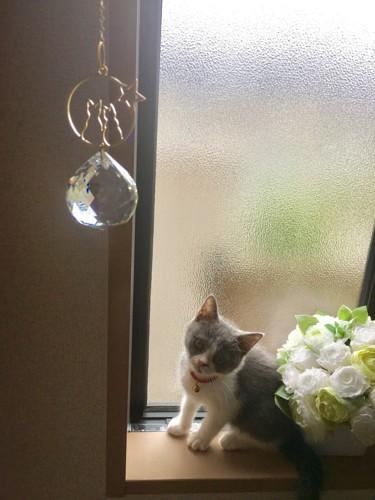 窓際のサンキャッチャーと猫