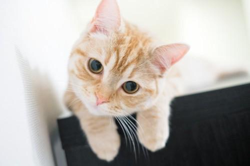 こちらを見つめるかわいいメス猫