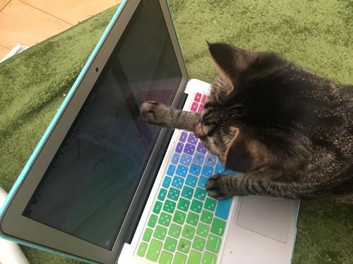 画面に手を伸ばす猫