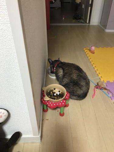 ドライフードを始めて食べる猫