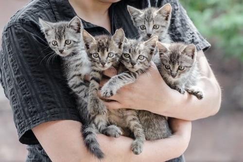 抱っこされるたくさんの猫