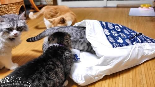 布団の中に入る猫とまわりに集まる猫たち
