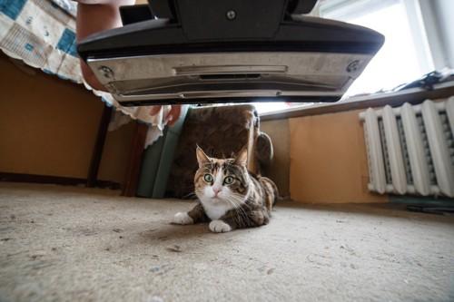 掃除機を怖がる猫