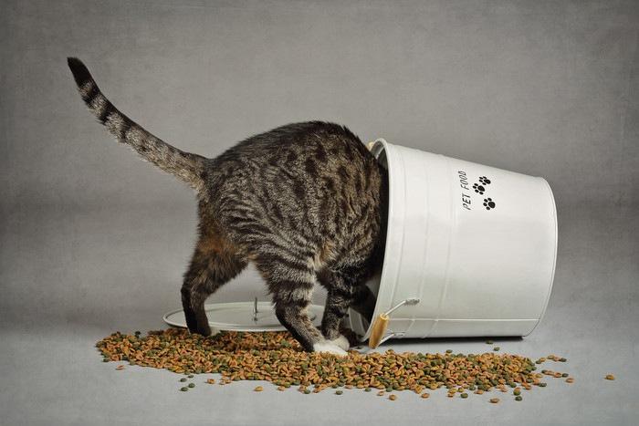 バケツに入ってご飯を食べる猫