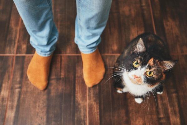 人の側で見上げる猫