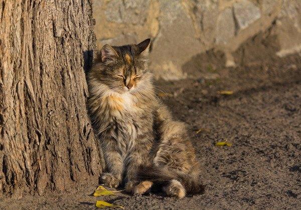 木によっかかり寝る猫
