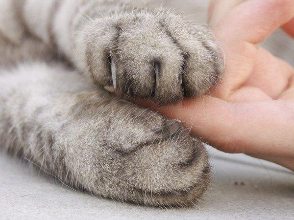 爪が出ている猫の手と人の指