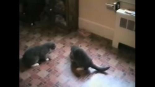 ご飯を食べる猫