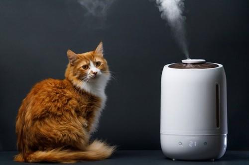 加湿器の横にいる猫