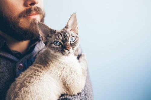 抱っこされて振り向く猫