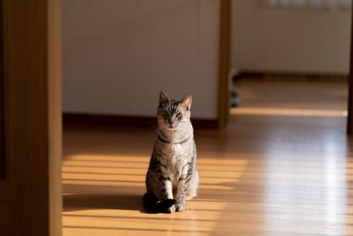 床に座ってこちらを見る猫