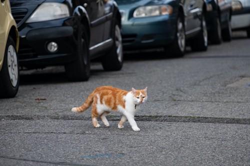 たくさんの車と道路を歩く猫