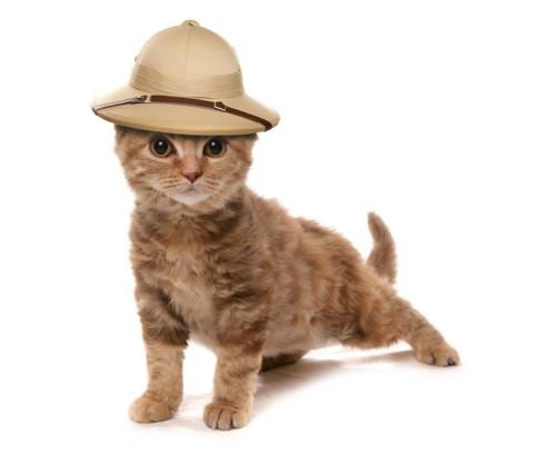 探検帽をかぶった猫
