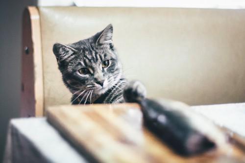 テーブルのかつおを狙う猫