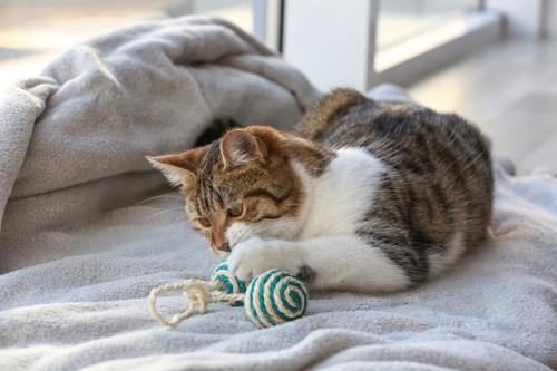 おもちゃを噛む猫