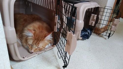 キャリーで寝る猫